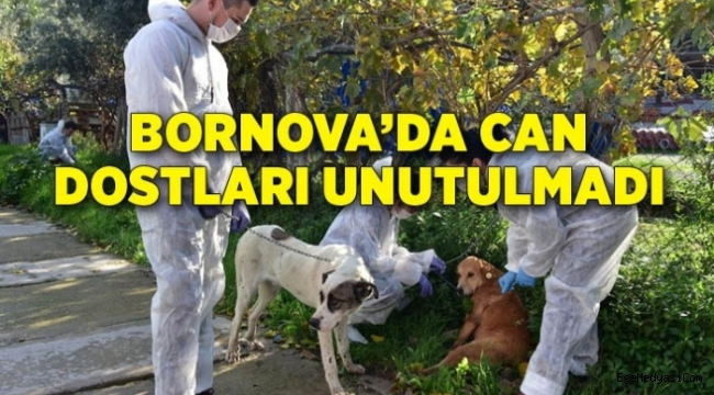 Bornova'da can dostlar yalnız değil